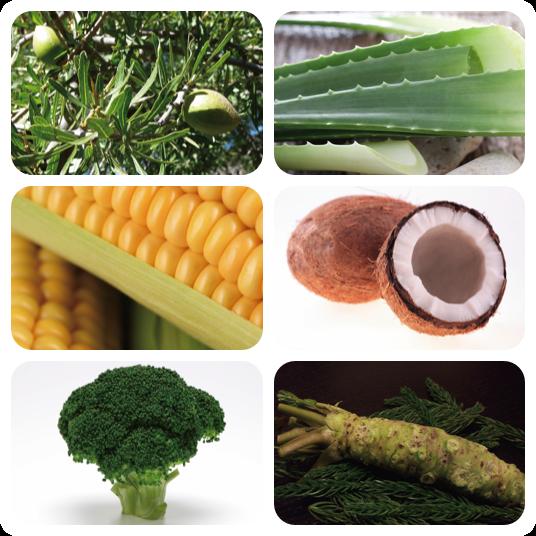 リナティラは香料以外は全て植物由来生分で構成